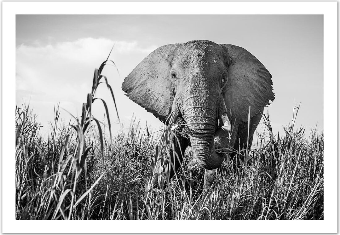 On the Banks of the Great Zambezi (Zambia), 2015, Limited Edition C-print
